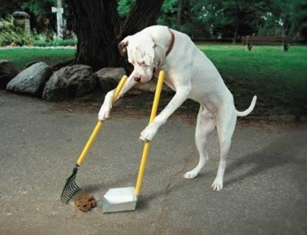 Dog Training Advice: How to Train a Dog at Home