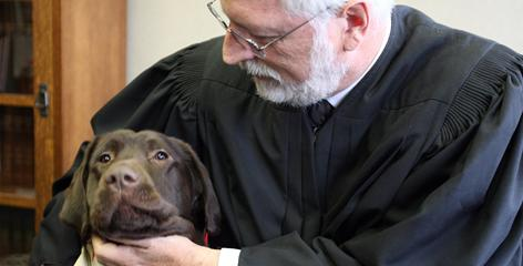 Dogs Gradually Used in Courtrooms