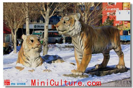 Siberian Tigers Moaning for Eyes Carved out